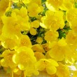 Stock Photo: Yellow buttercups
