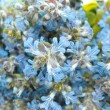 Blue field flowers abstract background — Foto Stock
