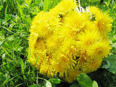 Bouquet of field flowers dandelion — Stock Photo