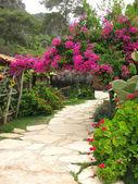 Road in flowering garden — Stock Photo