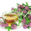 Stock Photo: Herbal tea with clover extract