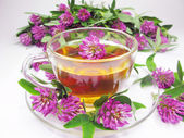 Herbal tea with clover extract — Zdjęcie stockowe