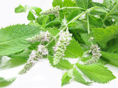 Fresh mint leaves with flowers — Stock Photo