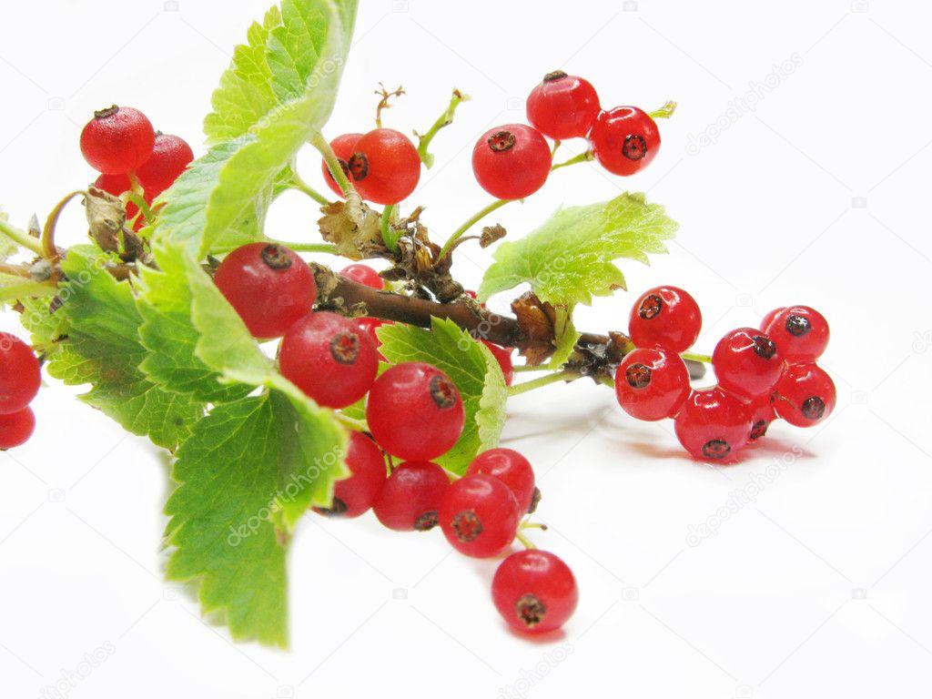 红醋栗浆果用树枝上的叶子 — 照片作者 nastya22