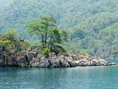 Kožešinové strom, který roste v moři egejském rock — Stock fotografie