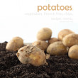 Stock Photo: Potatoes