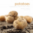 Potatoes — Stock fotografie