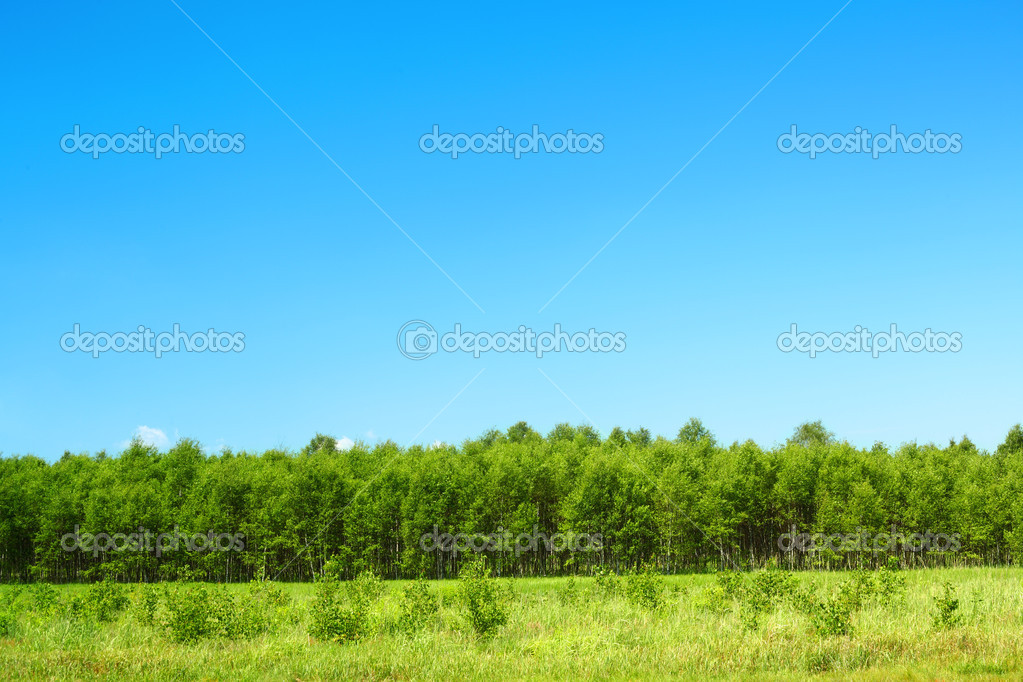 Green grass forest and sky — Stock Photo #11237992