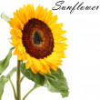Sunflowers decoration — Foto Stock