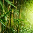 Bamboo — Stock Photo #11103930