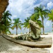 Iguana on The Caribbean Beach. Mexico - Stock Photo