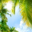 Tropical Background — Stok fotoğraf
