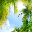 Tropical Background — ストック写真