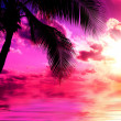 Sunset beach — Stockfoto
