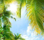 Fundo tropical — Foto Stock