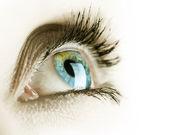 Eye isolated on a white background — Stock Photo
