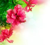 Hibiscus Flower border Design over white — Stock Photo