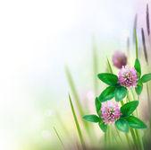 Herbal Border isolated on white — Stock Photo