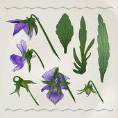 Botanical flowers vintage — Stock Vector