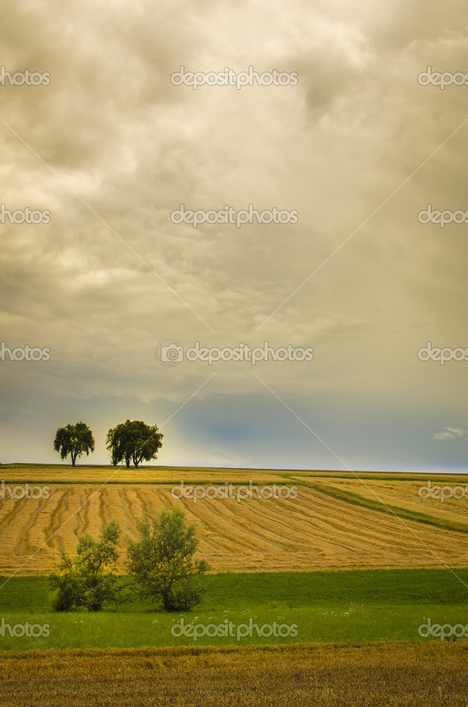 Landscape in summer  Stock Photo #11688252
