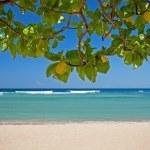Exotic tropical beach of Bali — Stock Photo