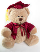Graduation Teddy Bear — Stock Photo