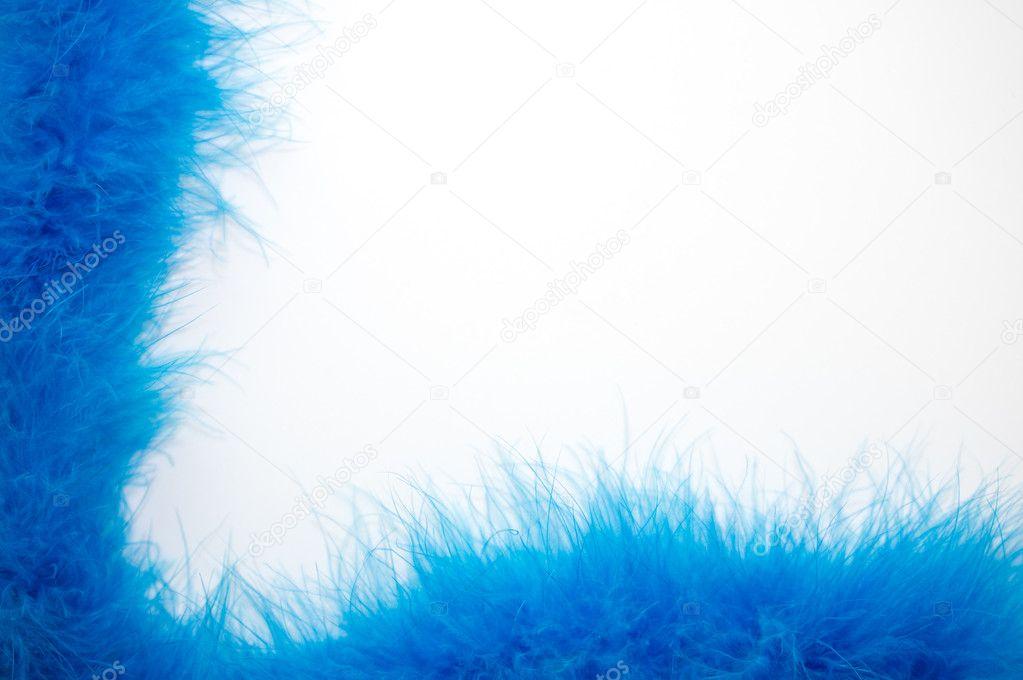 在白色背景上的抽象蓝色羽毛