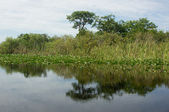 Florida Everglades — Stock Photo