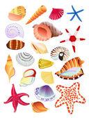 Seashells and starfish — Stock Vector
