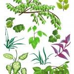 Постер, плакат: Leaves