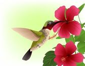Hummingbird with red flower — Stock Vector