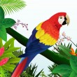 Stock Vector: Macaw bird in tropical forest