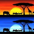 Beautiful sunset background on Africa wildlife - Stock Vector