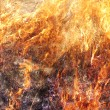 Stock Photo: Grass Fire