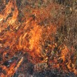Stock Photo: Fire in Grass