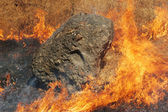 Fire and Rock — Stock Photo