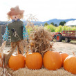 Pumpkins Scarecrow — Stock Photo