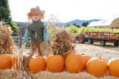 Pumpkins Scarecrow — Stock Photo