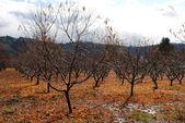 Fall Orchard — Stock Photo