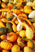 Fall Gourds — Stock Photo