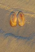 Olhos sandshell — Fotografia Stock