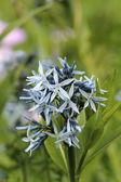 Beautiful bloom — Stock Photo