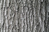 Oak tree bark textural background — Stock Photo