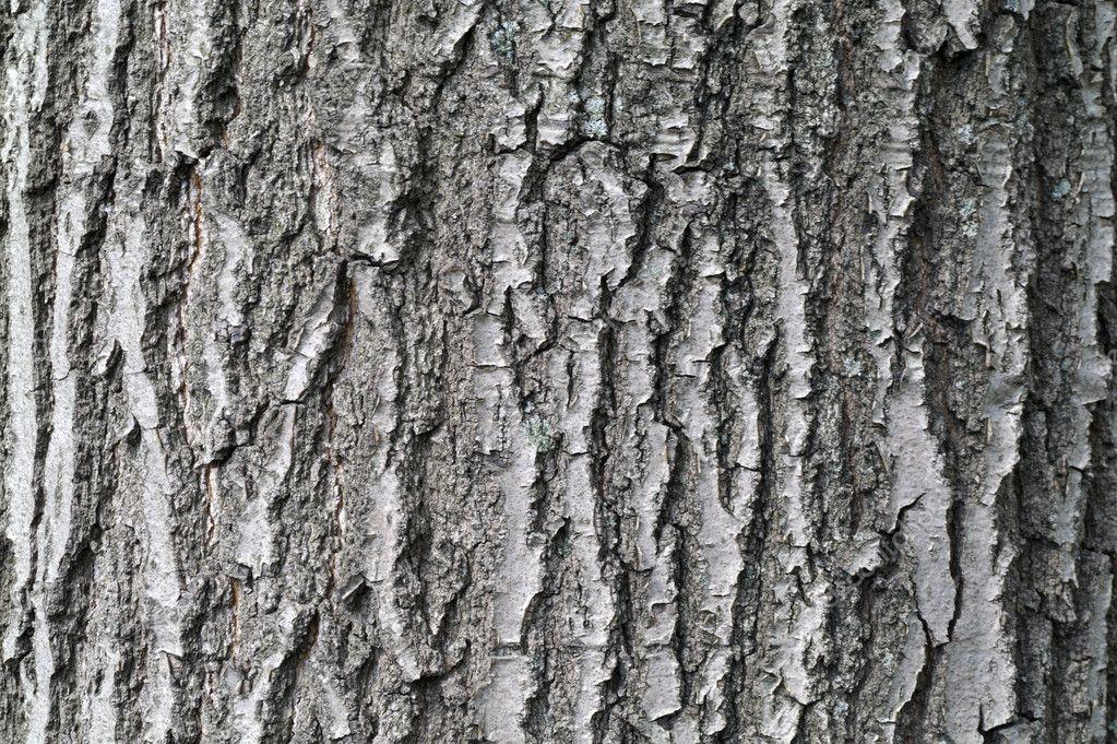 evergreen tree bark background - photo #9