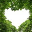Heart shape tropical forest frame — Stock Photo