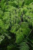 Foglia di felce in colore verde fresco — Foto Stock