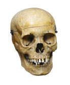 Human skull isolated on white background — Stock Photo