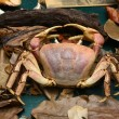 Crab in mangrove forest specimen — Stock Photo