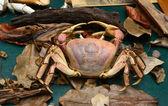Crab in mangrove forest specimen — Stock Photo