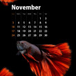 2013 Calendar A4 size, Siamese Fighting Fish concept — Stock Photo